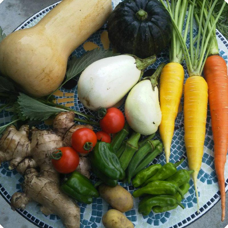 ゼンゼロ 土佐市 果物や野菜などの宅配食材通販産地直送アウル
