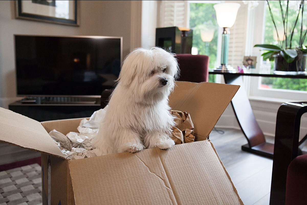 Relocating Your Pet to Hong Kong