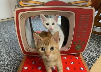 保護したネコ「世之介」に危機が⁉ そして6匹がついに2匹になった。