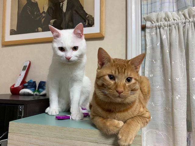 コロナ禍で保護した、子猫の世之介とタメ吉がこんなに大きくなった!