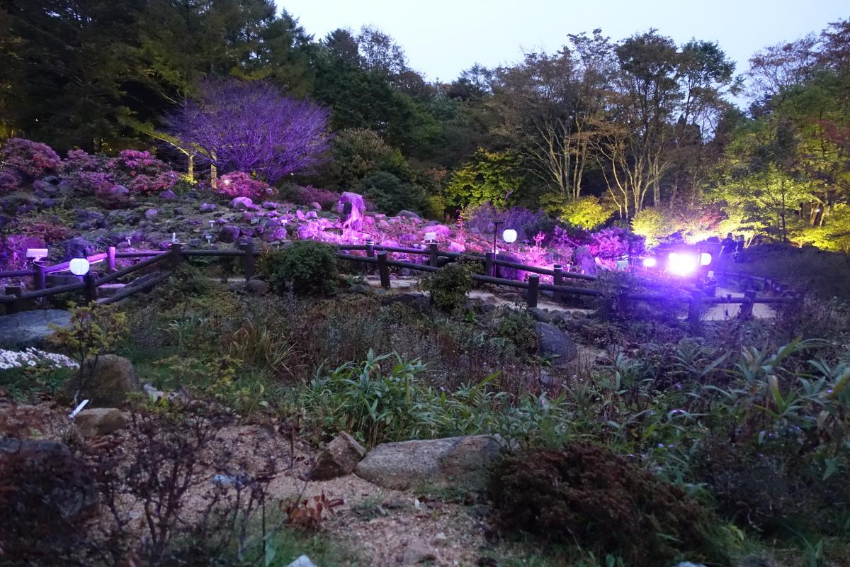 今年も六甲ミーツ・アートが開催! 夜の六甲山や有馬温泉を楽しむプログラムが新登場。