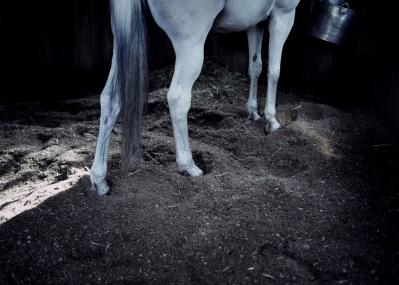 ホンマタカシが撮り続けてきた太宰府天満宮の御神馬。完成映像がついに公開!