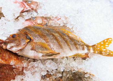 調理のアドバイスももらえる、こだわりの鮮魚店6選。<後編>