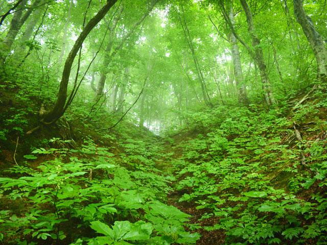 白神山地・白神の森 遊山道