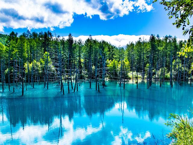 青い池・しらひげの滝