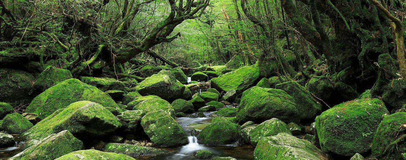 鹿児島県は九州南端の海に面した温暖な気候の県です。鹿児島市の中心部は西郷隆盛が育った場所で、「西郷隆盛銅像」や「維新ふるさと館」などの歴史が学べるスポットがあります。島津家の別邸の「名勝仙巌園(めいしょうせんがんえん)」は篤姫や島津斉彬が愛したことでも知られており、桜島や「錦江湾(きんこうわん)」を背景に四季の花々が咲く美しい景色が見られます。 桜島は鹿児島県のシンボル的存在の活火山で今でもたびたび噴火する様子が見られ、桜島へは鹿児島市から「桜島フェリー」で約15分で渡ることもできます。 鹿児島県は源泉数2700以上を有し、県内各地に多くの温泉地があります。鹿児島市から車で約1時間の「指宿(いぶすき)」には、浜辺に横になり温泉で温められた砂をかぶせてもらう「砂むし温泉」を体験できます。鹿児島市から車で約50分の霧島市には、「霧島温泉郷」と呼ばれる9つの温泉があって「霧島国際ホテル」など多くの旅館やホテルで露天風呂や岩風呂などを楽しめます。霧島市には鹿児島空港もあり、「霧島温泉郷」へは車で30分程度です。 鹿児島県には小さな島もたくさんあり、美しい海や島の伝統文化に触れることができます。鹿児島空港から飛行機で約40分、鹿児島港から高速船で約3時間の屋久島は世界遺産にも登録されていて、屋久杉が自生する森林の中でのトレッキングが楽しめます。鹿児島空港から飛行機で約40分、鹿児島港から高速船で約1時間半の種子島には「種子島宇宙センター」があり、ロケットの実機などを見られる他、美しいビーチでマリンスポーツなど自然を楽しめる島でもあります。