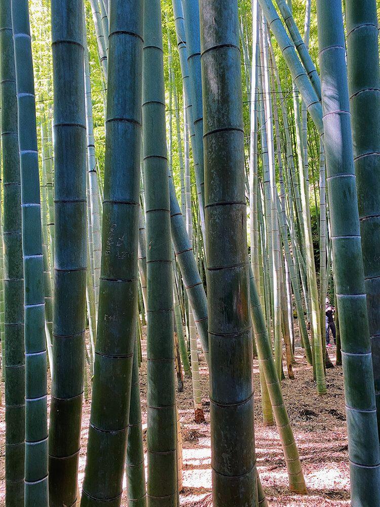 報国寺の竹林 photo by 永尾まりや