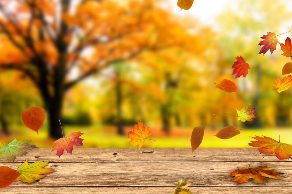 秋の落ち葉の画像