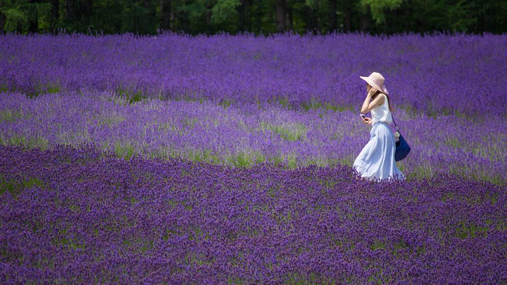 ラベンダー畑を歩く女性