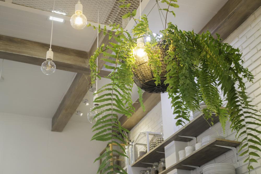 吊るすタイプの植物