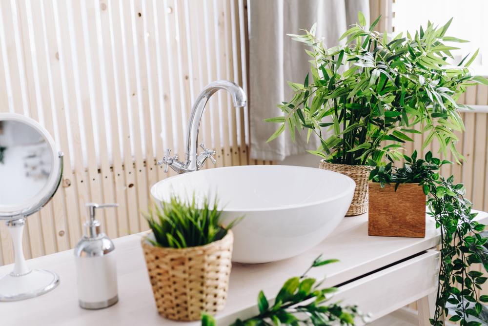洗面所の植物インテリア