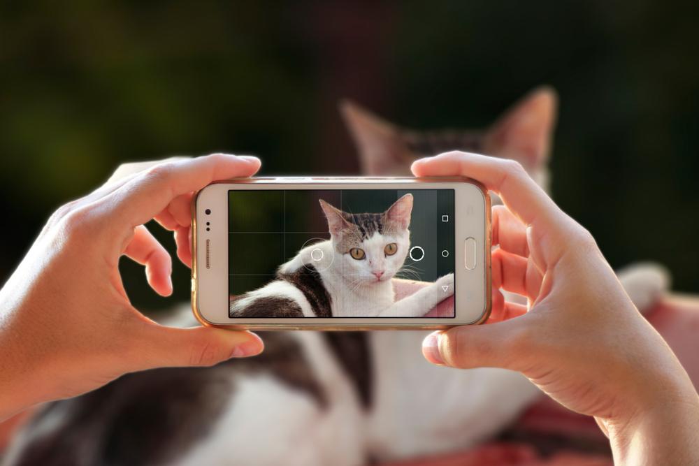 ペットの写真を撮影してラインスタンプの作成に使用する女性