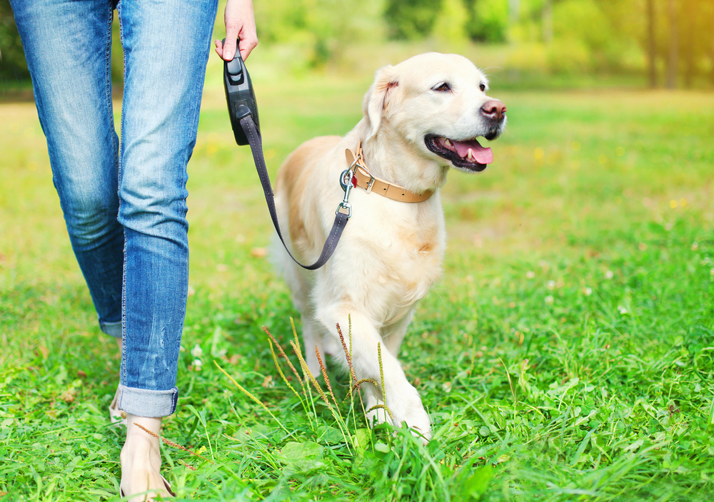 犬を散歩させる女性の足元