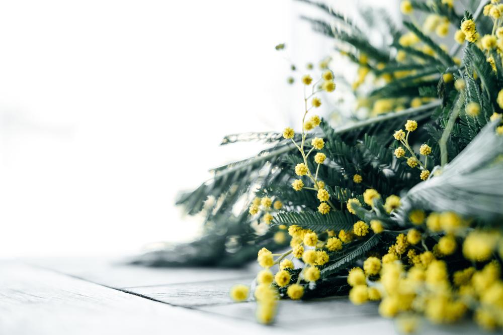 ミモザの花束の写真