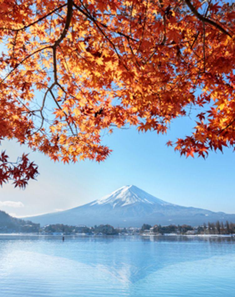 【1345】11月は紅葉を見に行こう!「富士河口湖紅葉まつり」