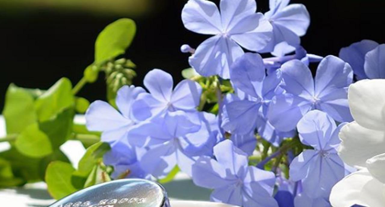 練り香水のおすすめアイテム8選!ほのかな香りを味方にして好印象に
