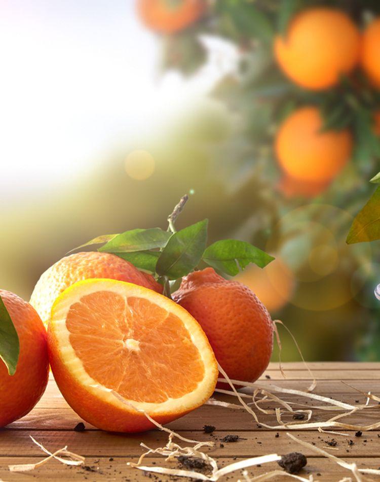 オレンジによる驚くべき効果とは?美容・健康・ダイエットに良い?
