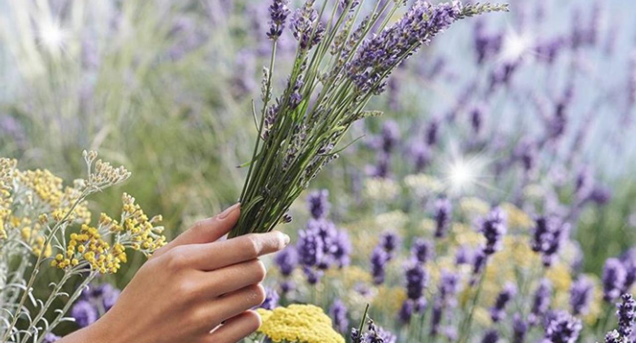 ラベンダーの香水の魅力とは?おすすめの選び方や手作り方法