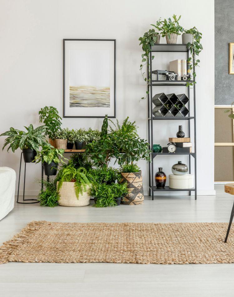 リビングに観葉植物を置いて快適空間に!風水効果やおしゃれな置き方