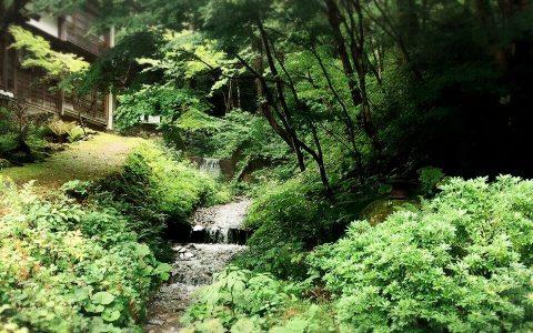 山の上流から法師温泉にながれる水