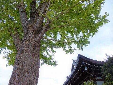 藤沢駅から行く!地元に愛されるのどかなパワースポットまとめ3選
