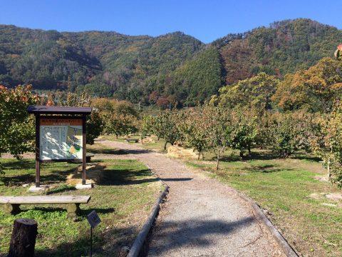 長野県千曲市の歴史を森将軍塚古墳と豊姫が愛した「杏」で感じよう