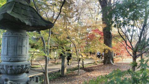 世田谷区一有名な「常盤伝説」を巡る旅 愛された常盤姫の悲しい結末