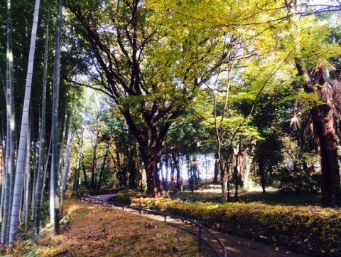 横浜市営地下鉄センター北と南駅で巡る 横浜の四季と歴史を感じる旅