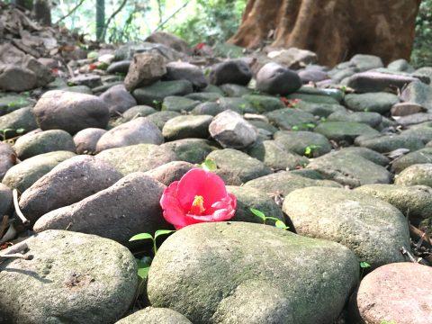 バラエティに富んだ魅力がたくさん!宗像・大島散策を満喫 歴史旅