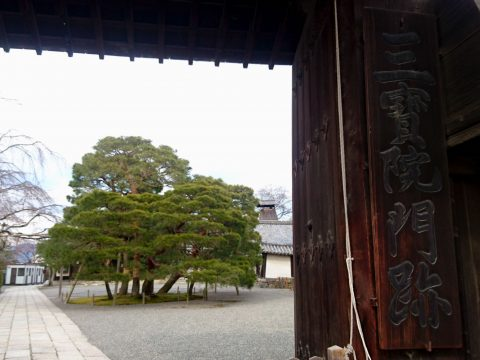 京都最古の五重塔が残る世界遺産 京都「醍醐寺」の三宝院を楽しむ