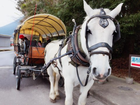 1975年から続く辻馬車でゆったり癒され巡る 由布院レトロ旅