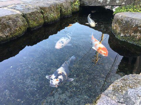 島原の豊かな湧水が流れる鯉の泳ぐまちで心の芯までリフレッシュ!