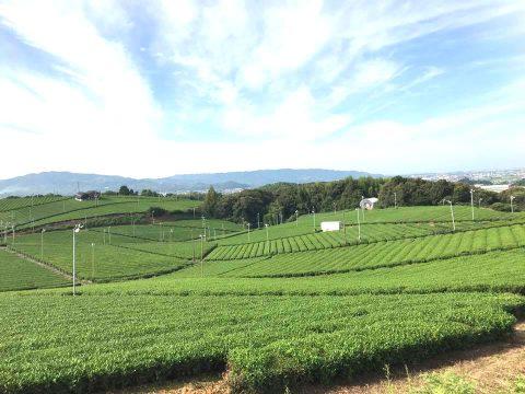 日本一高級なお茶である八女茶の歴史と伝統をじっくりと味わう旅