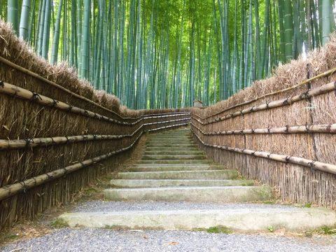 自然感じ歩く嵯峨鳥居本 重伝建を抜けて愛宕神社までの参道を歩く
