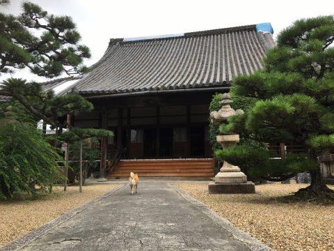 富田が芝と呼ばれた荒れ地にできた日本を代表する商いの町大阪富田林