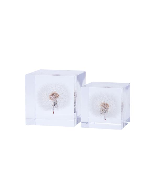 Sola cube / タンポポ 5cm