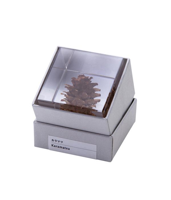 Sola cube カラマツ / ウサギノネドコ