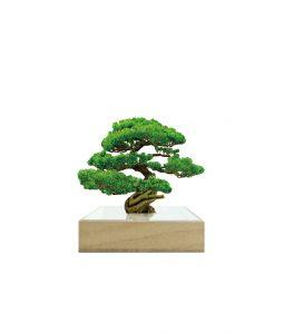 mini bonsai/松