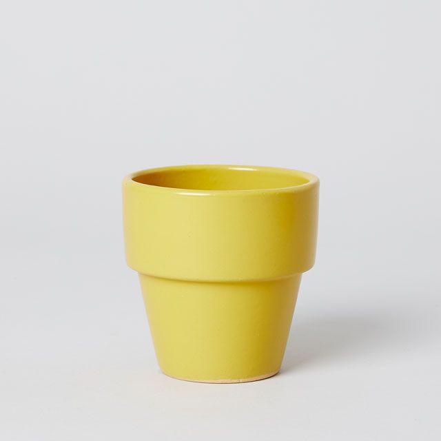 TODAY'S SPECIAL COLORED POT 3号 やまぶき