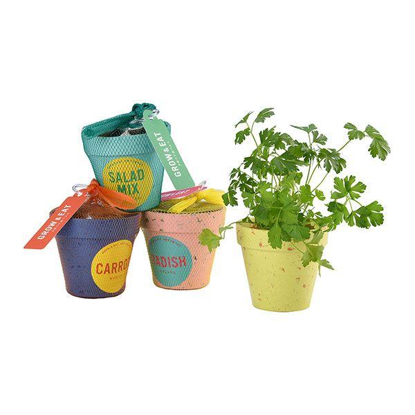 G&E 栽培セットフレッシュ ミニトマト