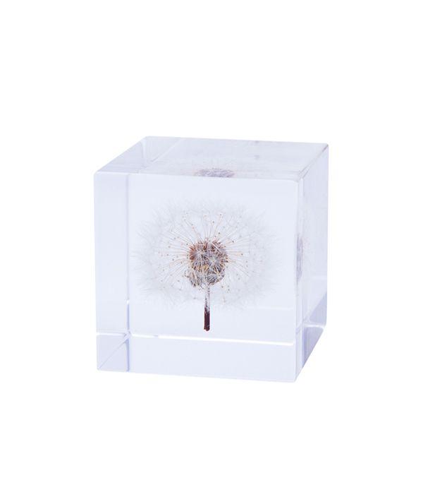 Sola cube / タンポポ 4cm