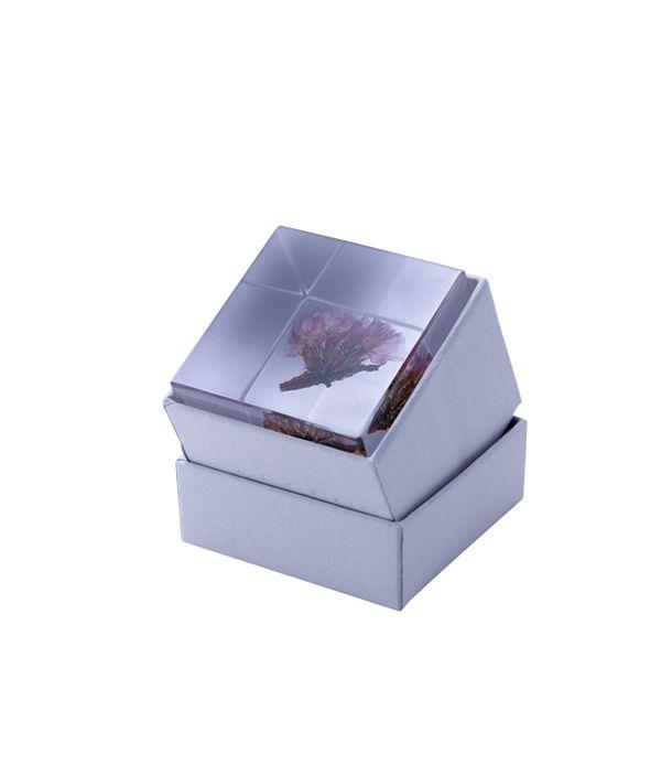 Sola cube / スターチス