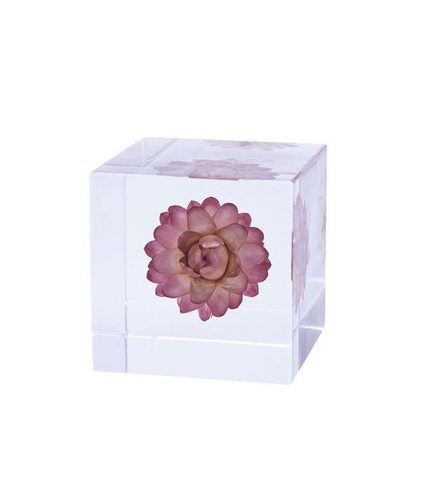 Sola cube / カイガラソウ