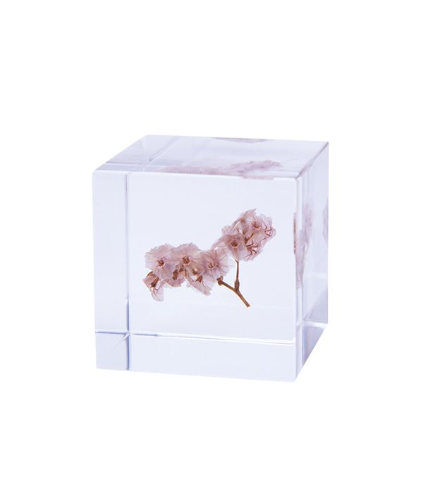 Sola cube / サマーチェリー