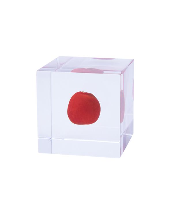 Sola cube / ワイルーロ