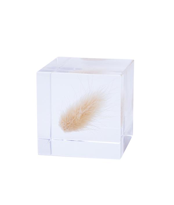 Sola cube / ウサギノオ