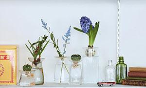 花と多肉、球根植物、サボテンをたのしむ