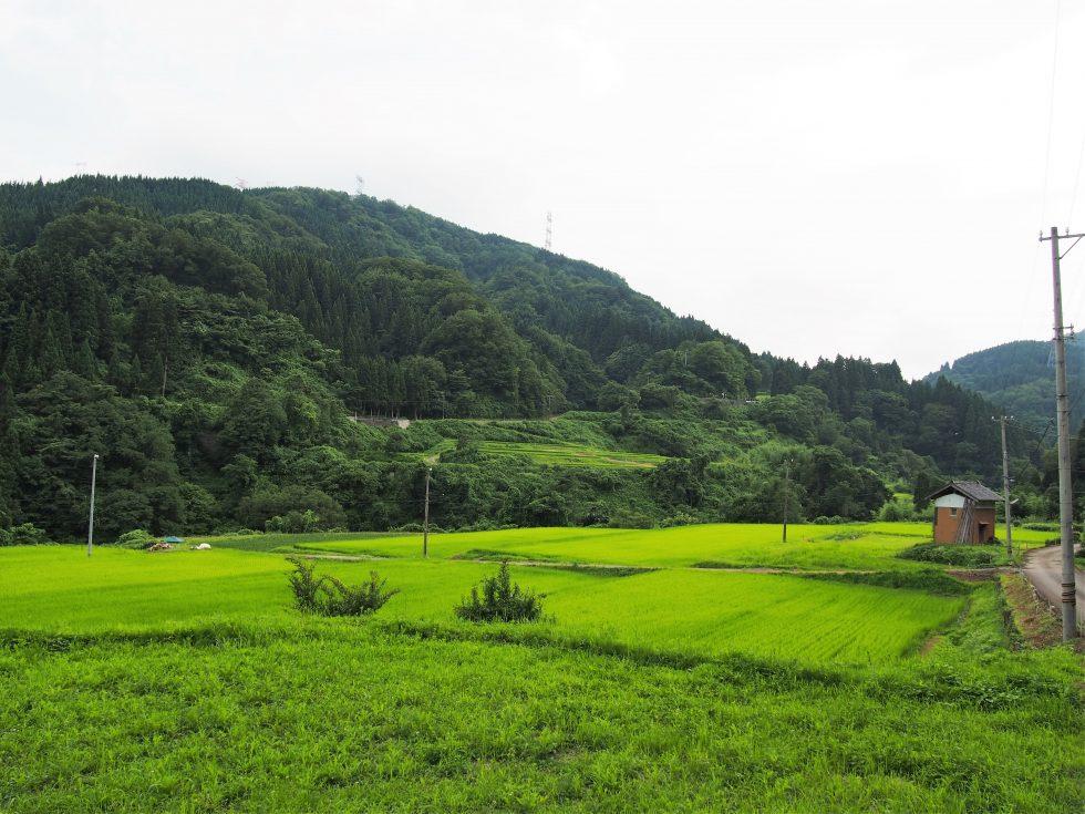 渡辺さんの田んぼ。1ヘクタールってけっこう広い
