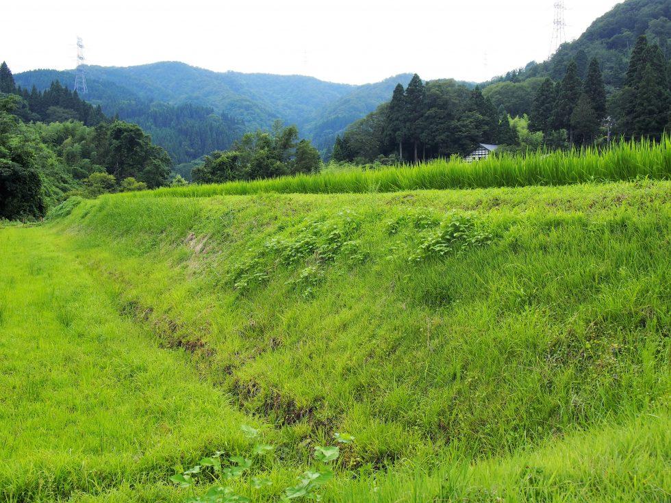 雑草処理が必要な土手。すべての作業を渡辺さんと綱川さんのふたりでこなしている