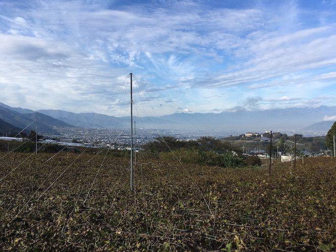 甲府盆地一帯に広がるぶどう畑